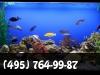 Установка аквариума. фото